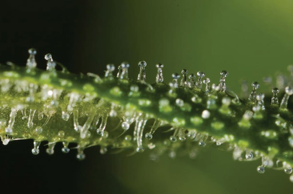 Stuff That You Really Didn't Know About Weed!