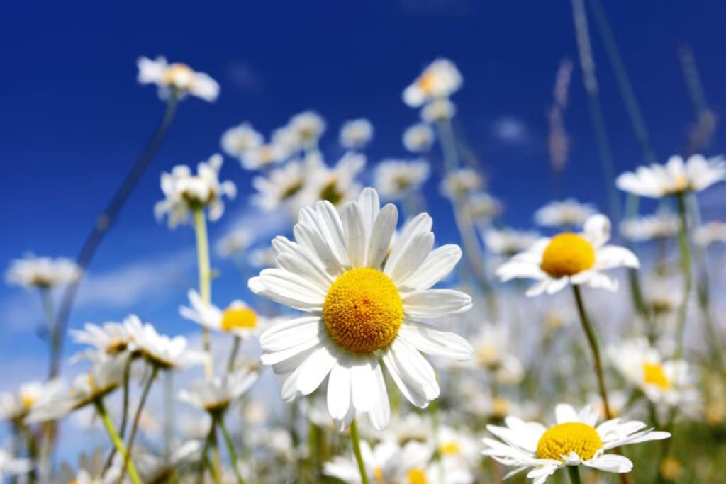 My Blooming Mind of Daisies
