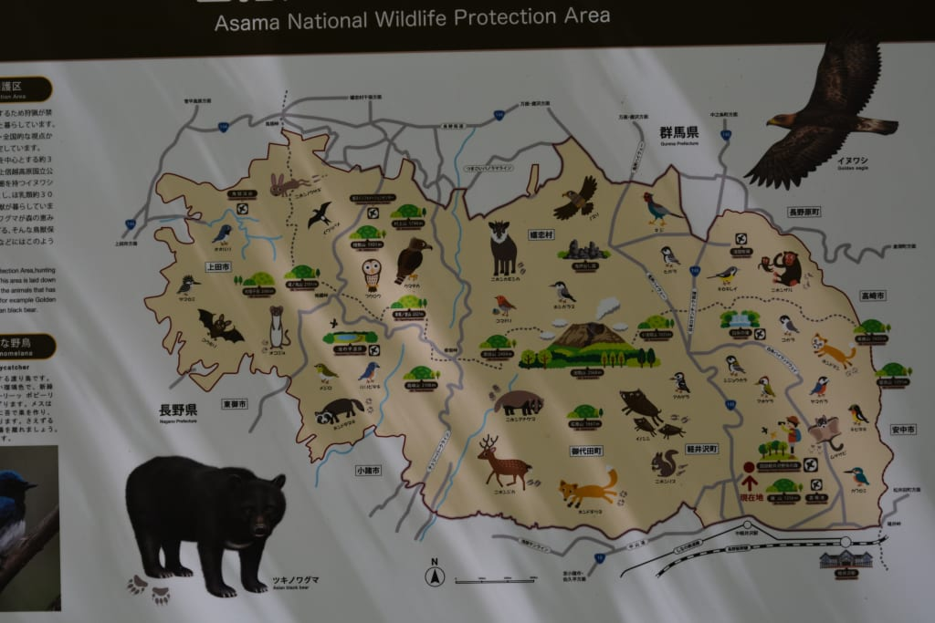 Bear Conservation and Eco-Tourism in Japan