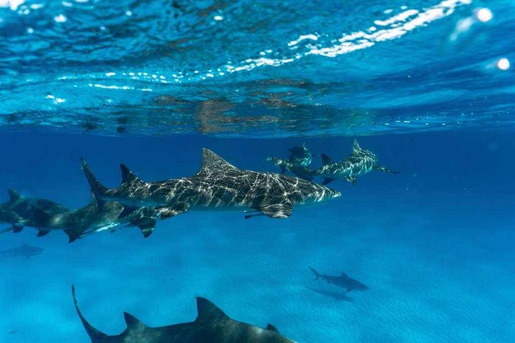 Flipping the Script on Sharks