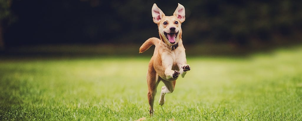 5 Ways to Ensure You Have a Healthy and Happy Dog