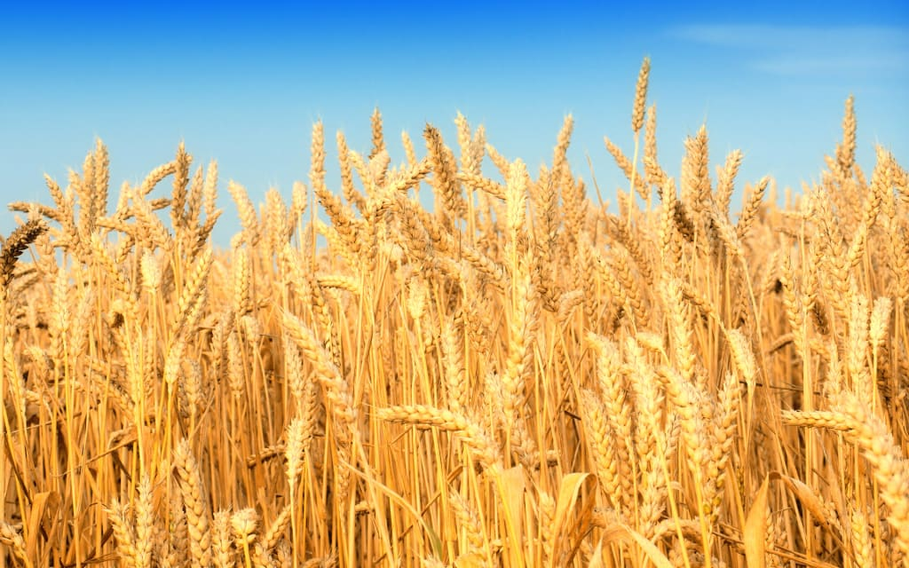 What's Wrong with Gluten?