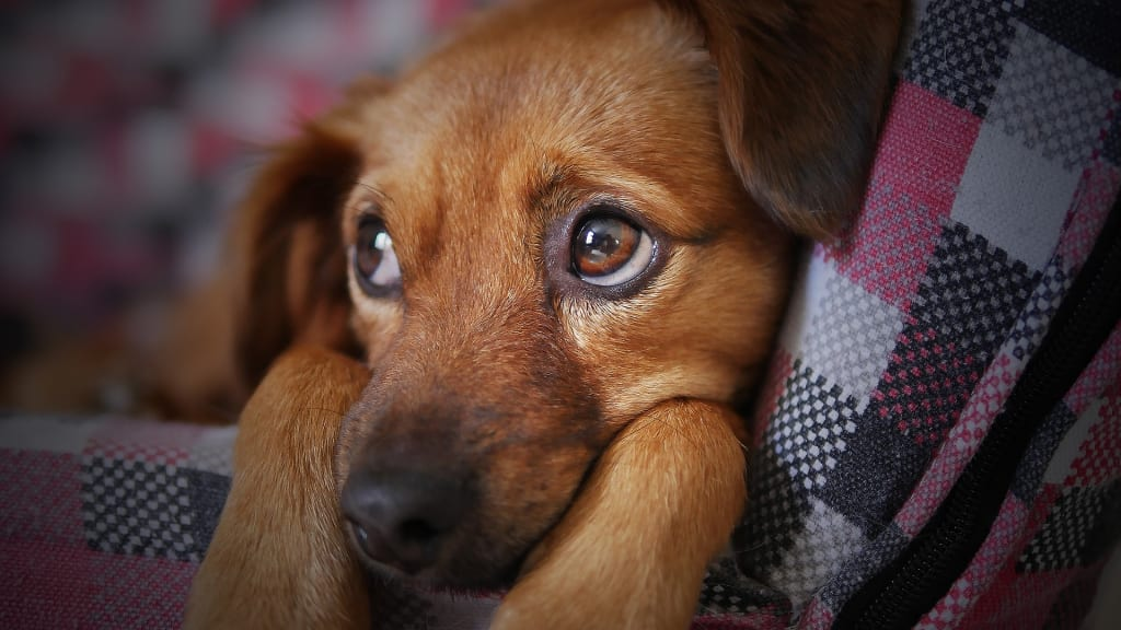 Dealing with the Loss of Your Dog