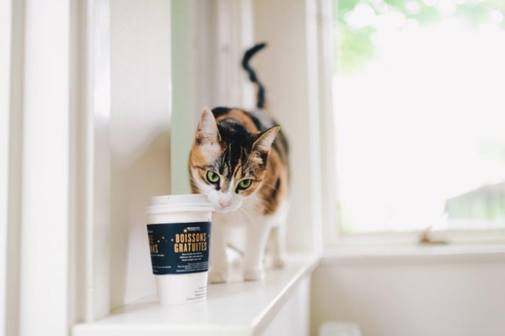 Cat Café? What Is That?