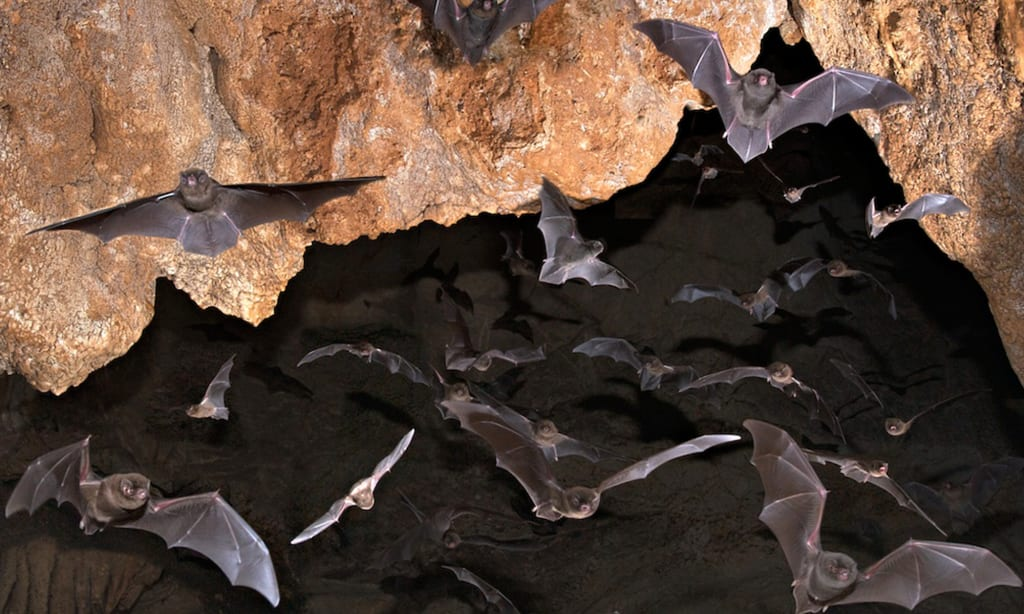 10 Strange and Fascinating Animals That Live in Caves