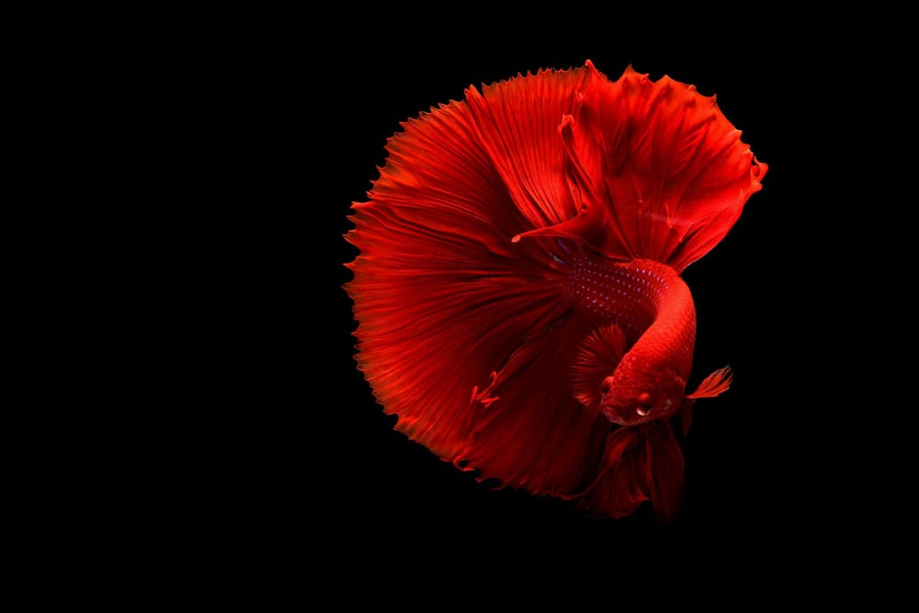 The 5 Things You'll Need to Care for a Betta Fish the Right Way