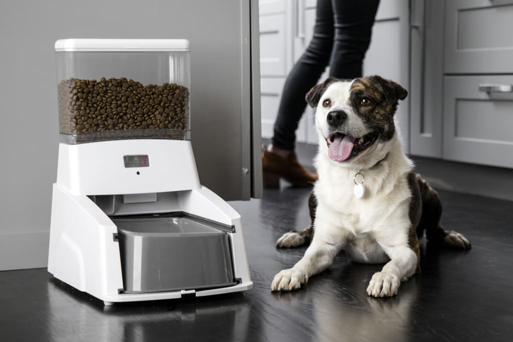 Keep Your Pet Fit and Fed with the Wagz Smart Dog Feeder