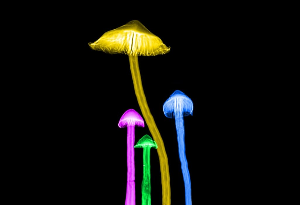 Why Taking 'Shrooms Will Make You a Better Person