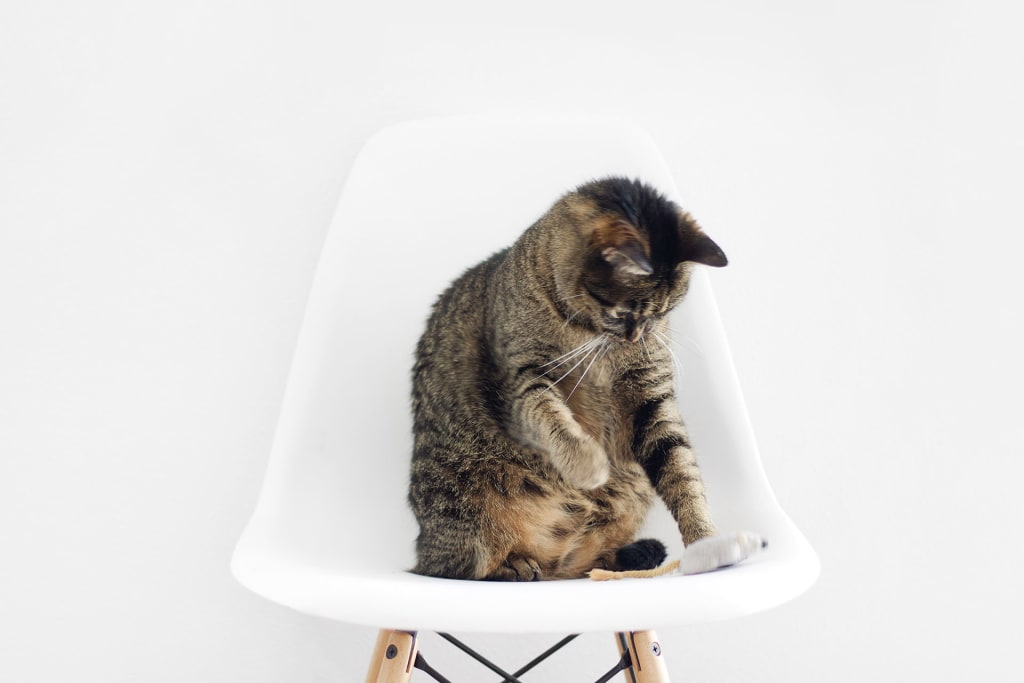 Must Have Cat Furniture