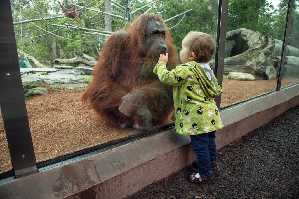 Zoos: Good or Bad?