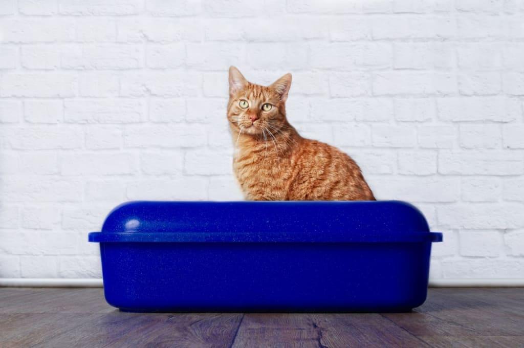 Best Organic Cat Litter Brands