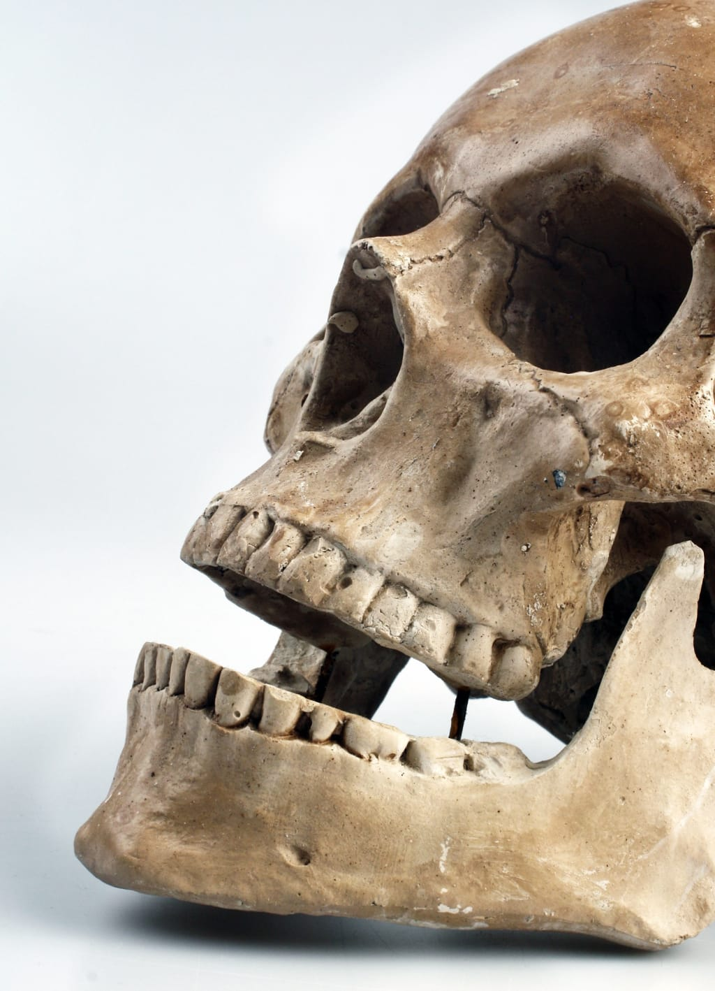 What Is a Forensic Anthropologist?