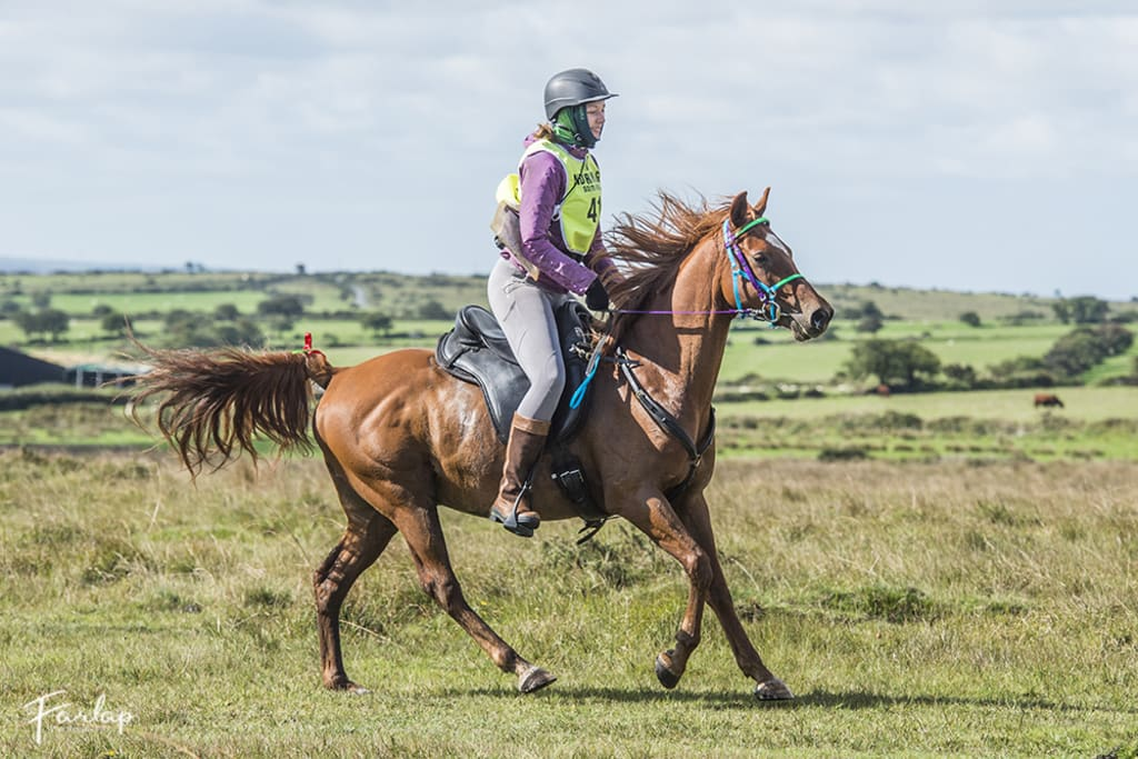 Endurance Riding–Allaskar's Scout