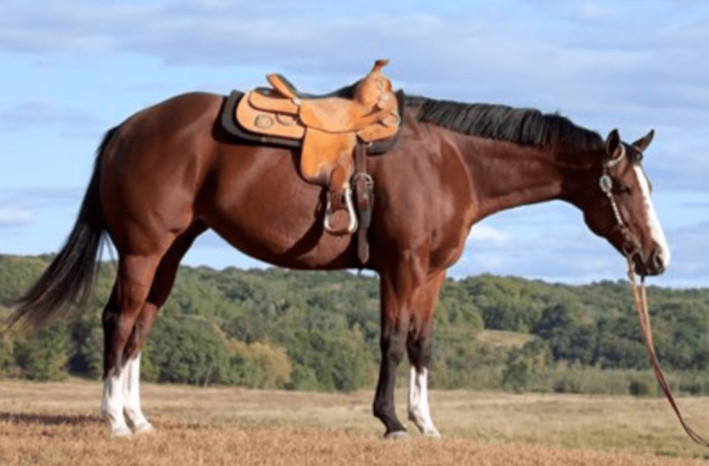 HorseNado