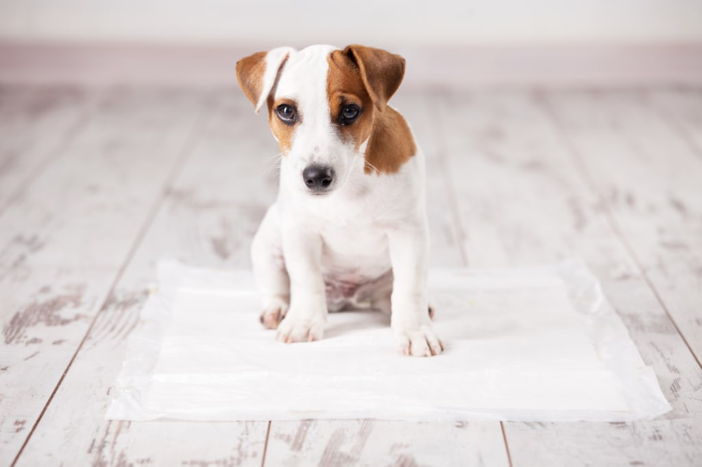 10 Best Pee Pee Pads for Dogs on the Market in 2018
