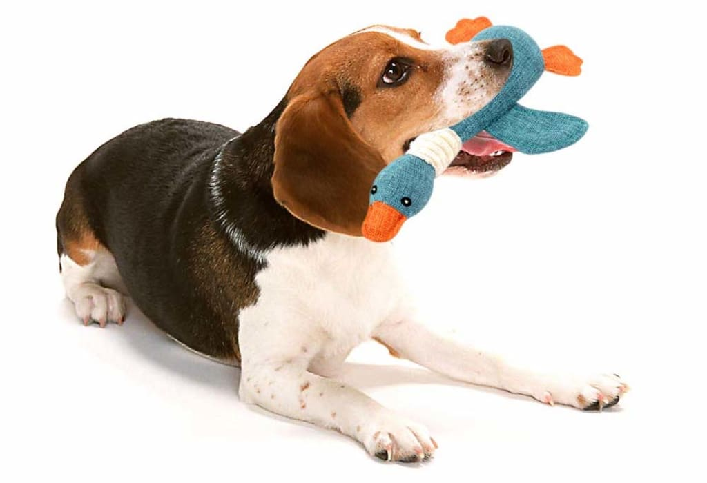 Best Toys for Small Dogs