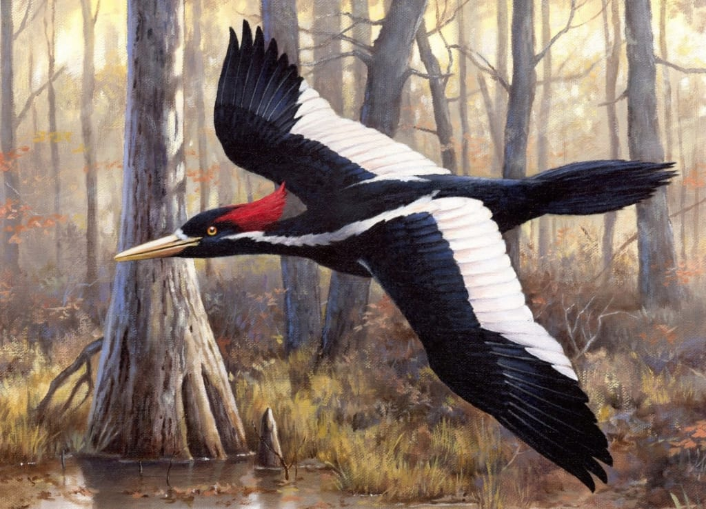 10 Extinct Animals That Might Not Really Be Extinct