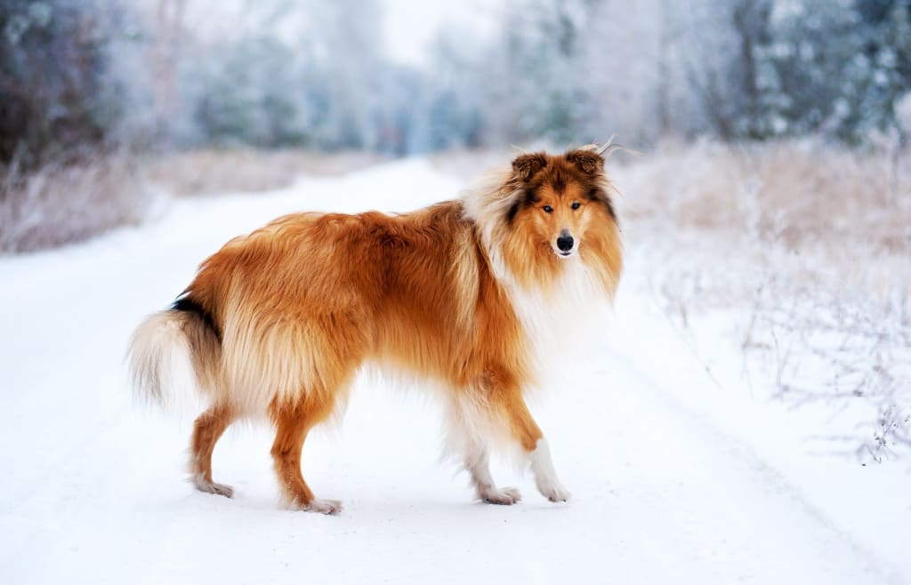 10 of the Most Loyal Dog Breeds