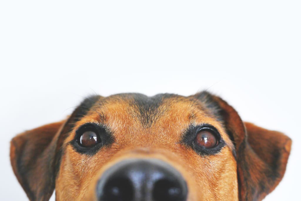 Keeping Your Pet Healthy and Secure