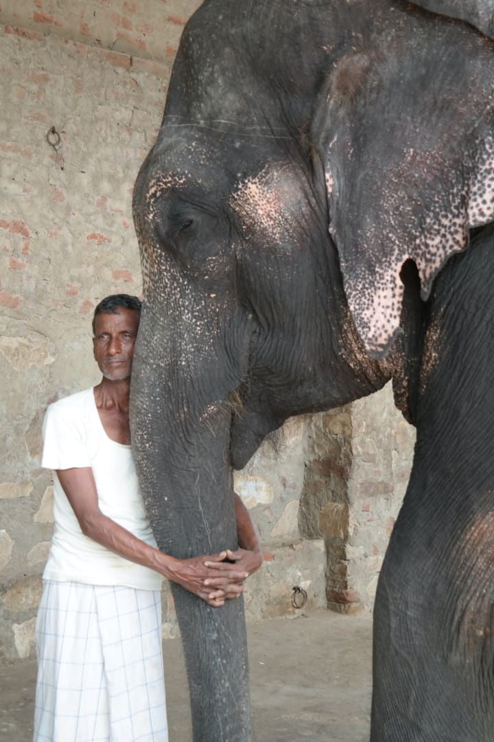indian man with elephant