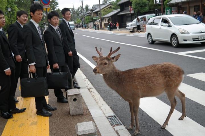a deer crossing the street in Japan