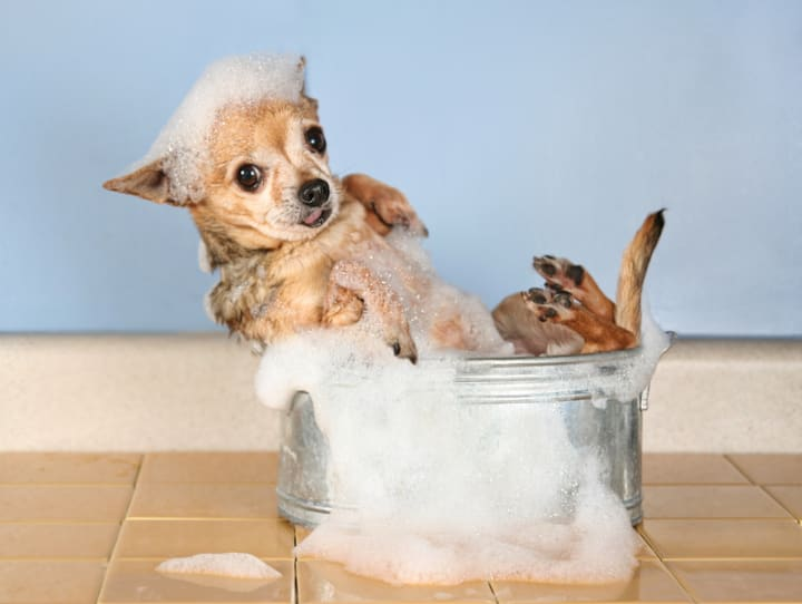 Easy DIY Recipes for Dog Shampoo