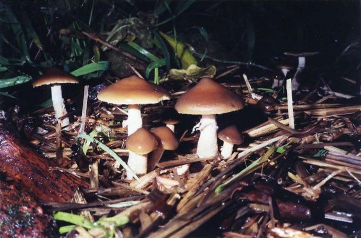 Magic Mushroom Guide