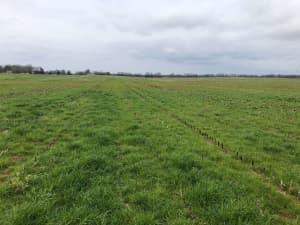 LowBoy planted after corn - Moulton, AL, 3/12/2020