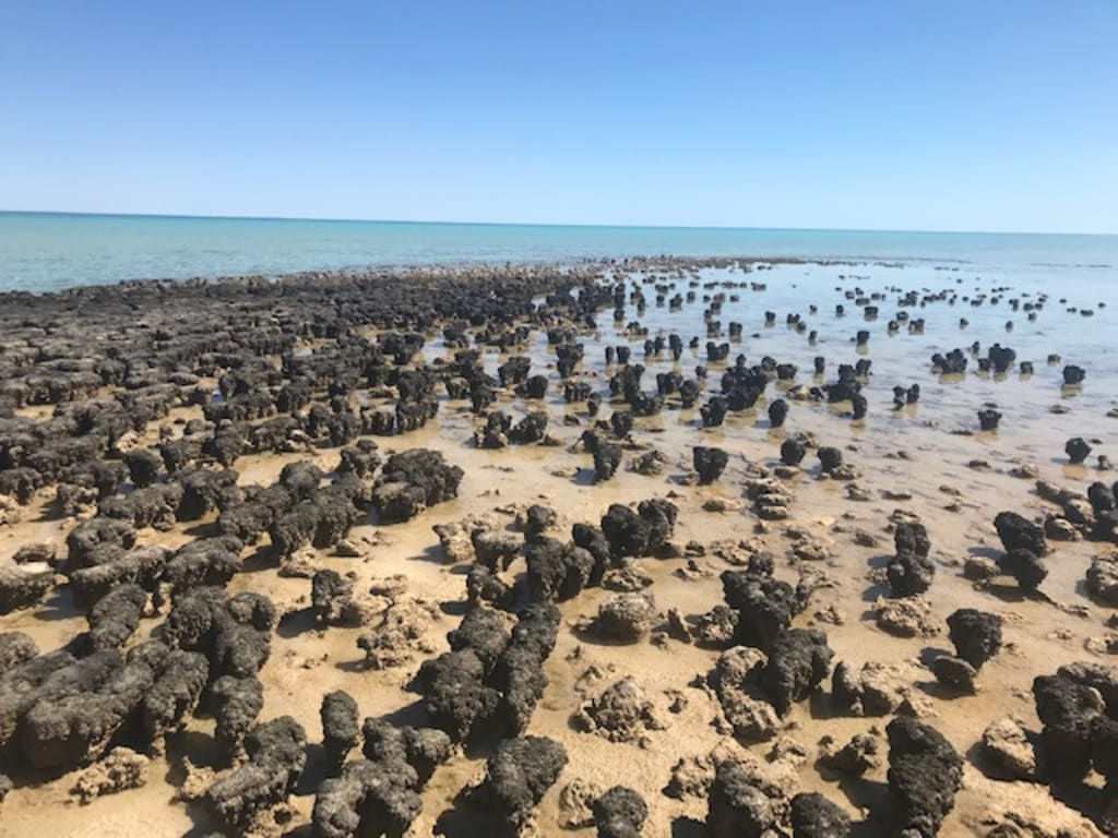 photo of Hamelin pool stromatolites