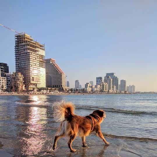 0418 travel telaviv k8pftx