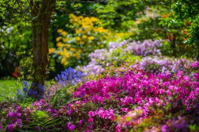 0418 travel arboretum vooodz