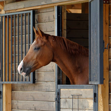 Equine Influenza Prevention
