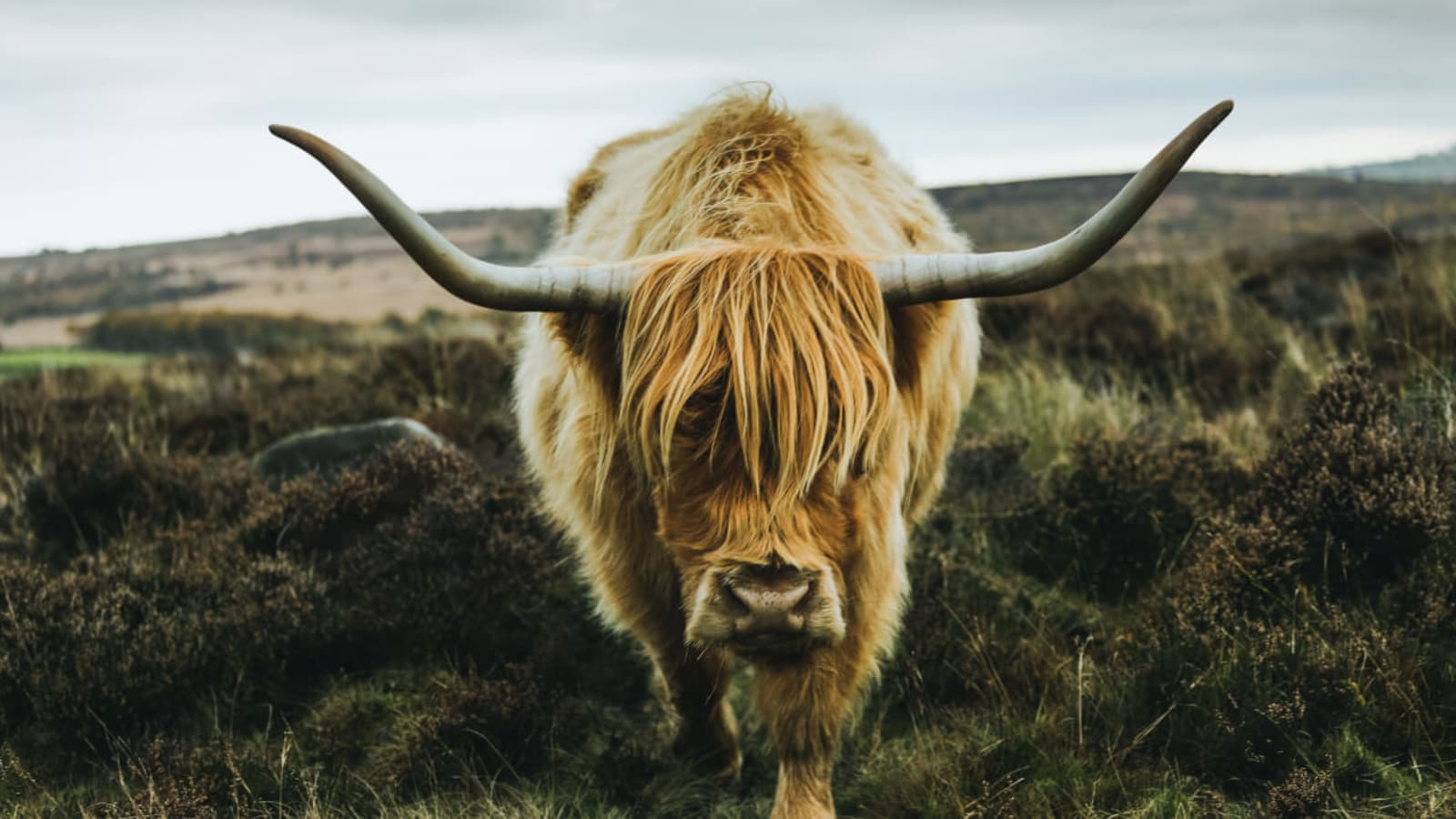 Yak Shaving: On Doing the Work Before the Work