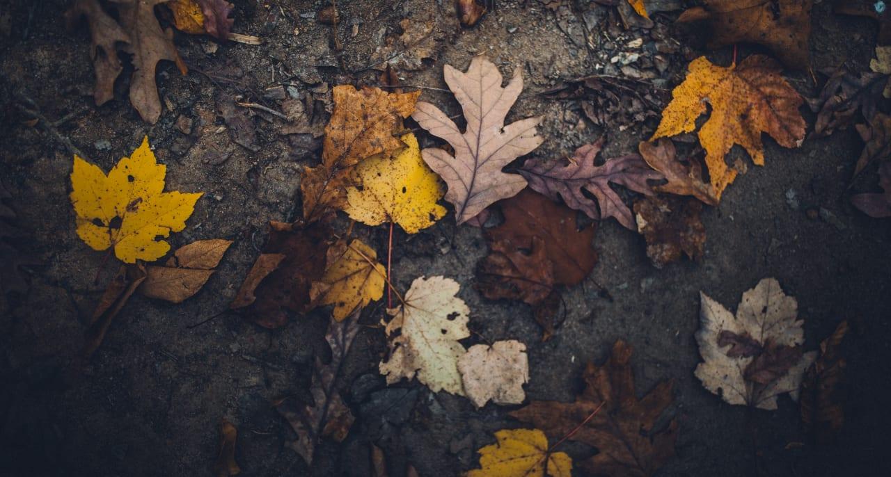 Leaves on dirt.