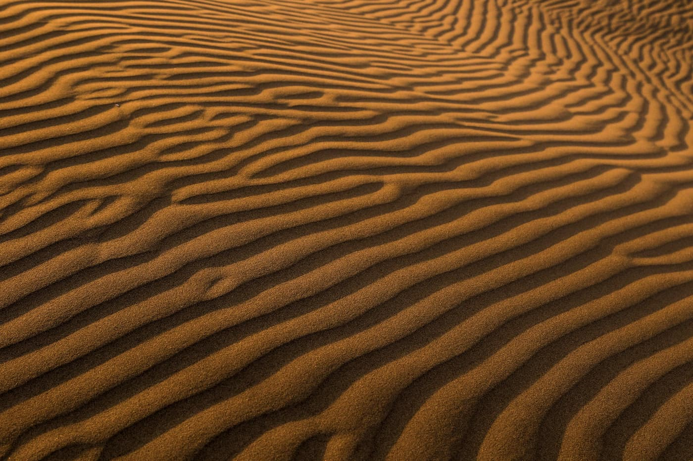 A pattern formed in sand dunes by wind.
