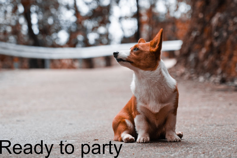 """Corgi with the text """"Ready to party"""" overlaid."""