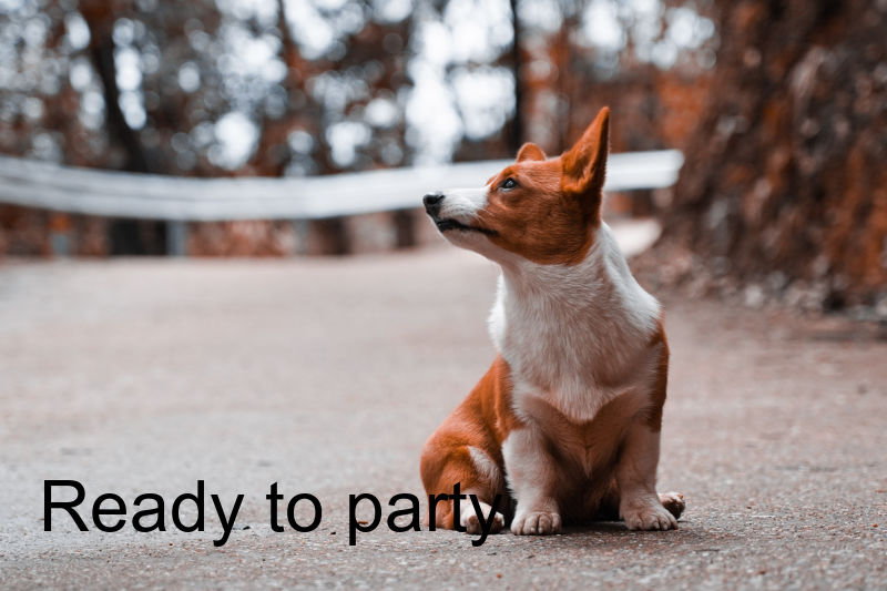 "Corgi with the text ""Ready to party"" overlaid."