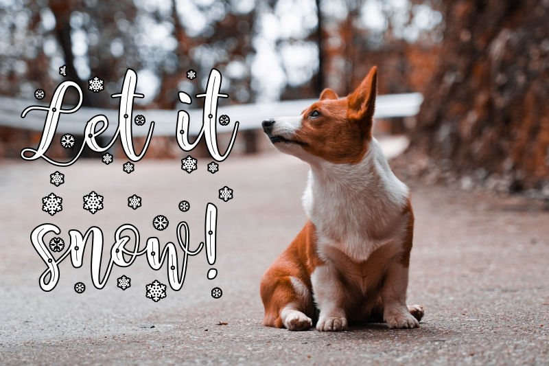 "A corgi with the text ""Let it snow!"" overlaid."