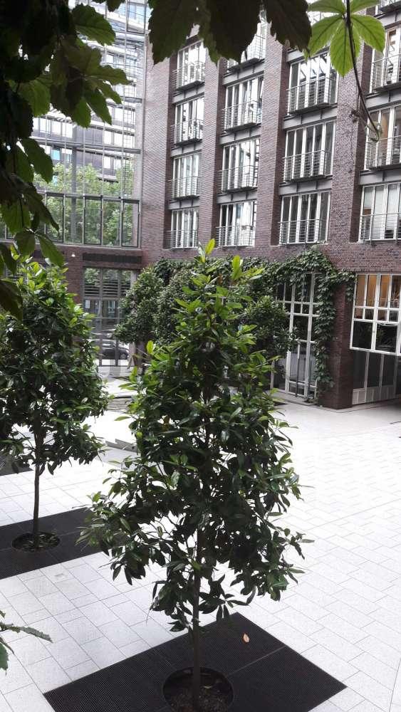 Büros Hamburg, 20095 - Büro - Hamburg, Altstadt - H1380 - 9570651