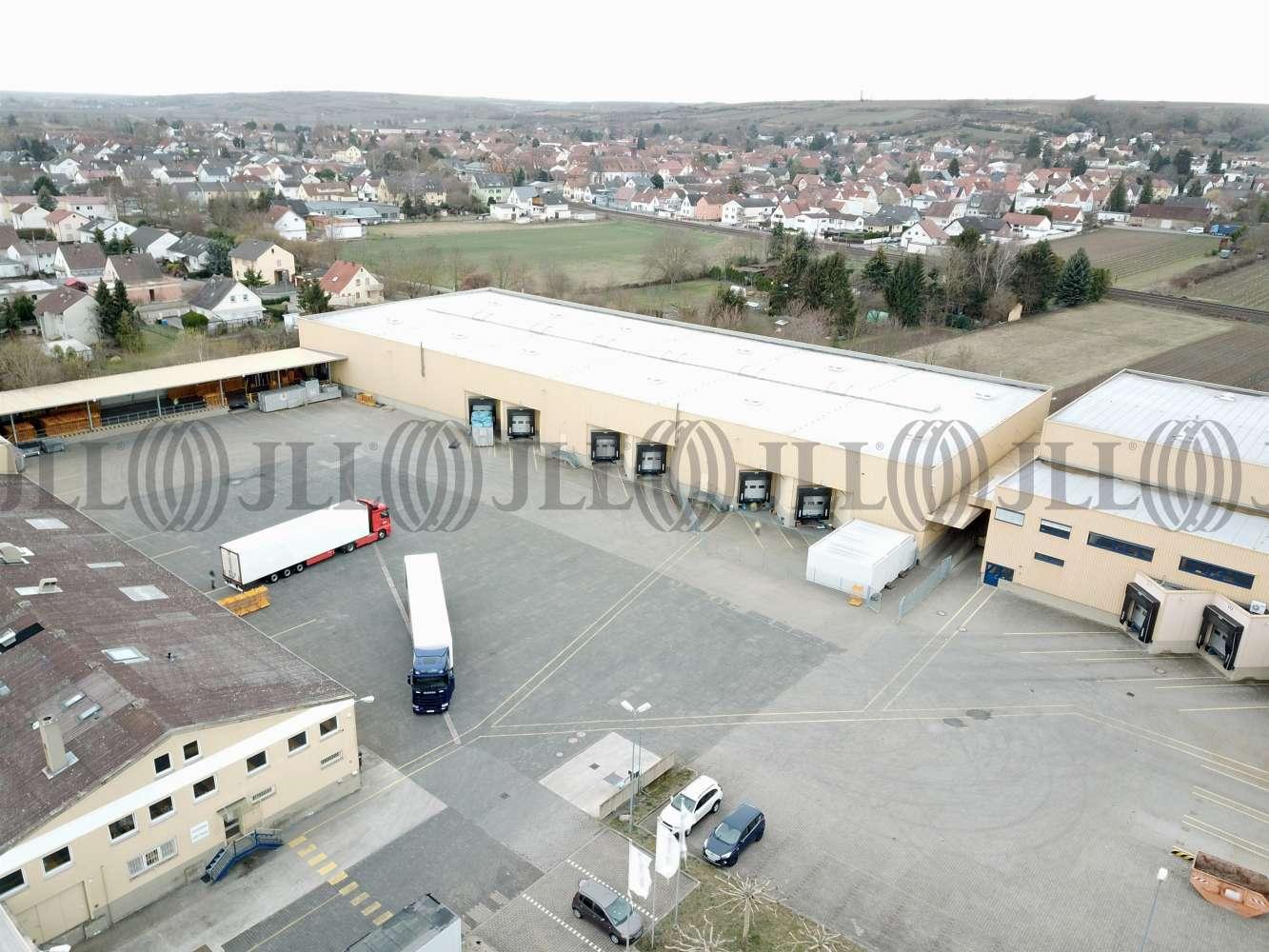 Hallen Alsheim, 67577 - Halle - Alsheim - F2620 - 10235155