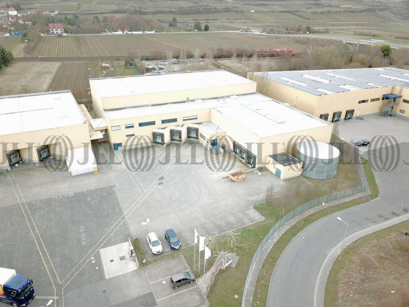 Hallen Alsheim, 67577 - Halle - Alsheim - F2620 - 10235156