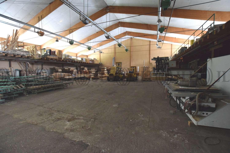 Hallen Wittibreut, 84384 - Halle - Wittibreut, Wald - M1267 - 10629272