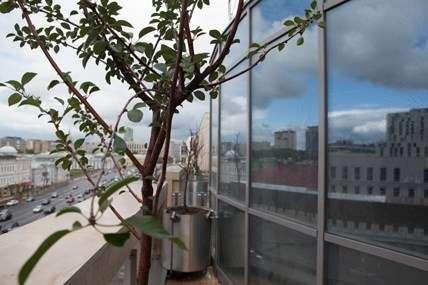 Вишневый Сад - Офисная недвижимость, Аренда 2