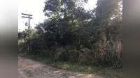 Imóvel em Iguape - 60445 - Land - Sale