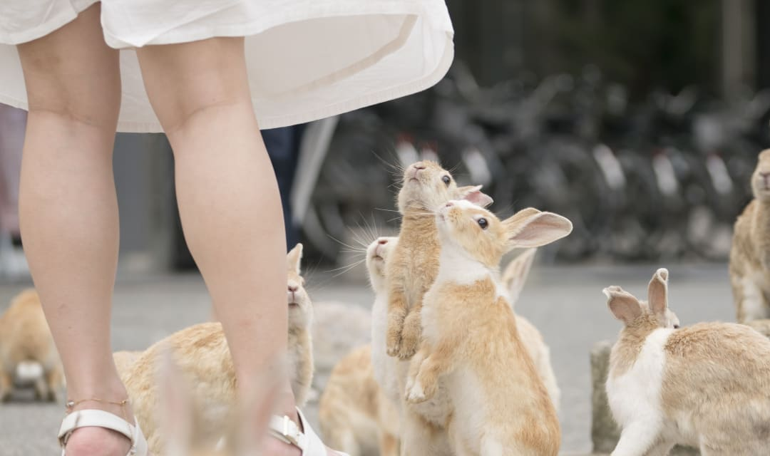 a group of rabbits sitting on their back legs around a woman's legs