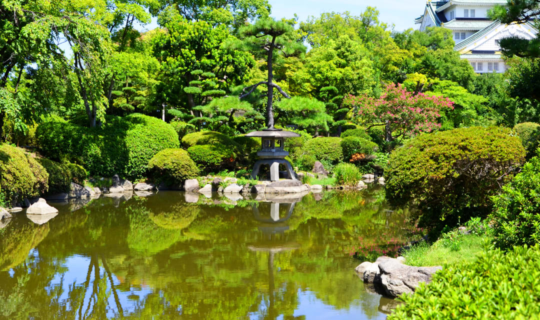 a pond surrounded by green japanese trees