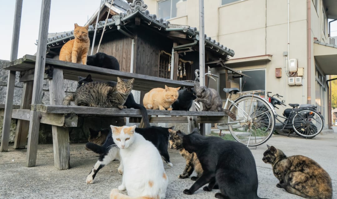 a group of cats sitting on and around a picnic table in front of buildings