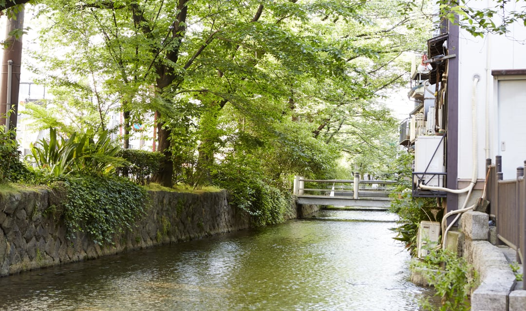 a water-filled canal lined with green trees and foliage