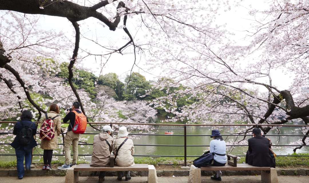 people sitting under a cherry tree looking out across water