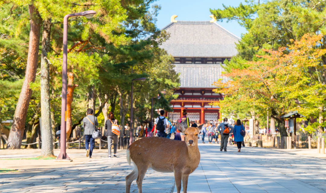 a deer standing on a path with a temple in the background